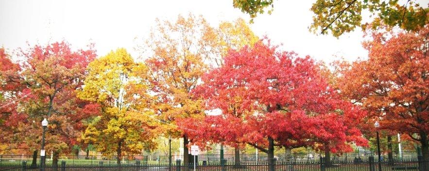 「愛上波士頓的理由之一」波士頓秋天