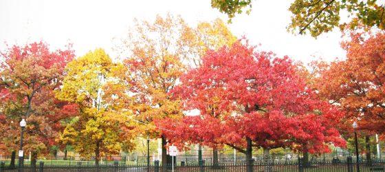 |生活風景|波士頓秋天 的最後一瞥 Autumn Colors in Boston