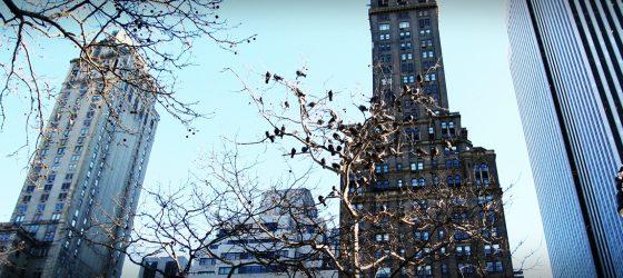  旅行風景 從前從前,在紐約... Once Upon a Time in New York...